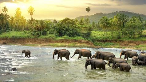 I Sri Lanka finns det ett rikt djur- och växtliv.